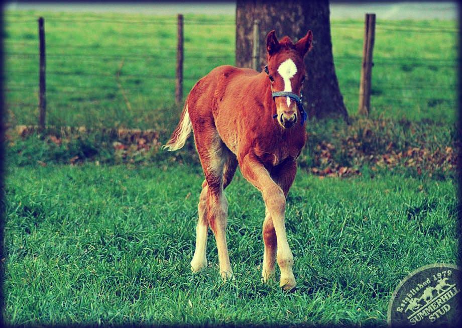 Foal 6