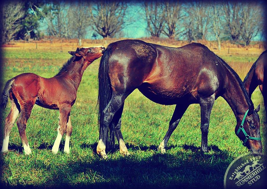 Mare and Foal 5