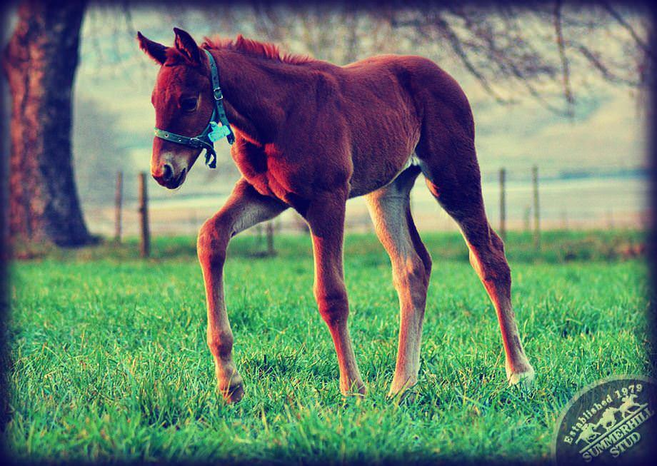 Foal 8