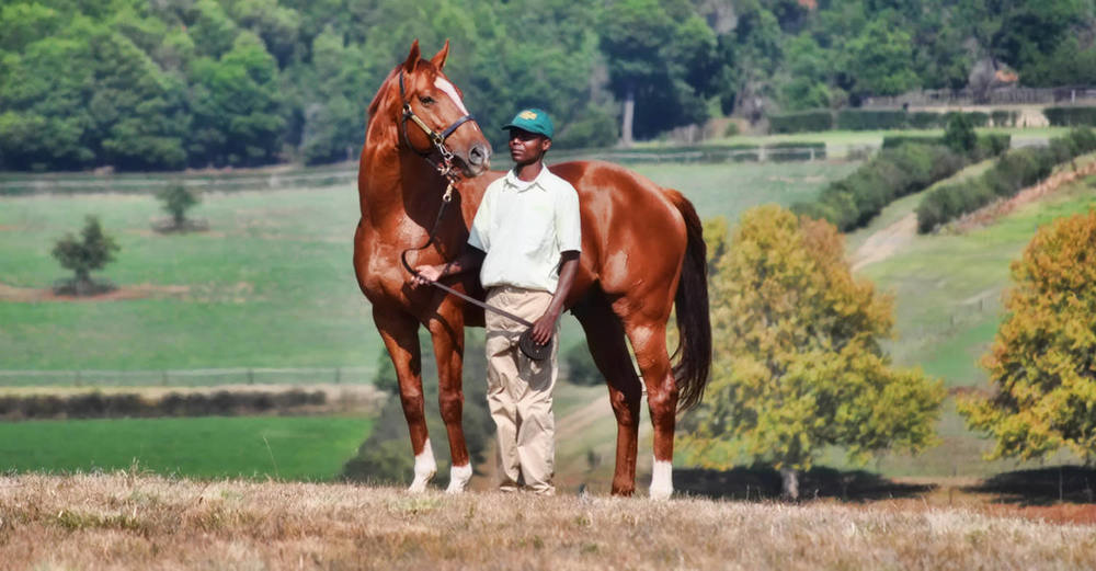 Admire Main (by Sunday Silence) at Summerhill Stud