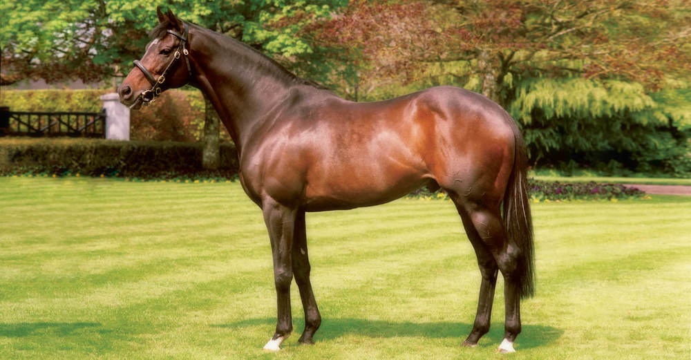High Chaparral / Coolmore Stud (p)