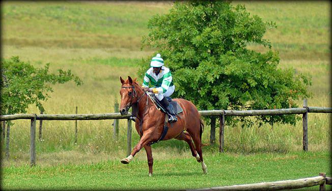 3-summer-gallops.jpg