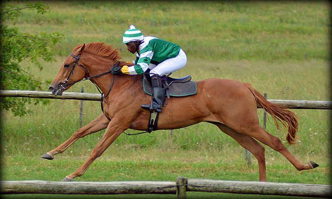6-summer-gallops.jpg
