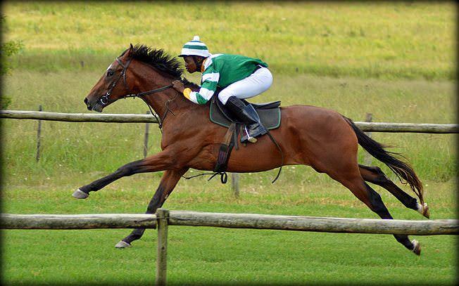 7-summer-gallops.jpg