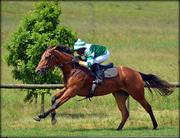 8-summer-gallops.jpg