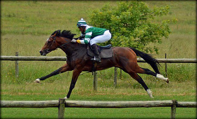 9-summer-gallops.jpg