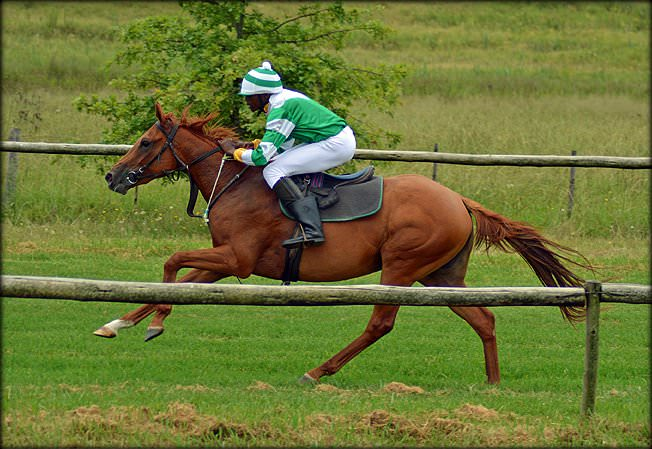 10-summer-gallops.jpg