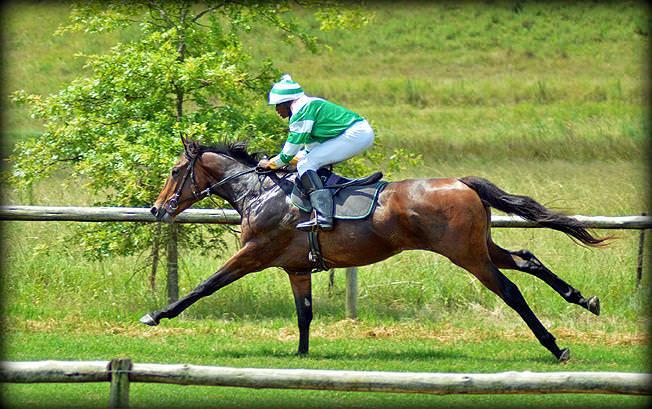 12-summer-gallops.jpg