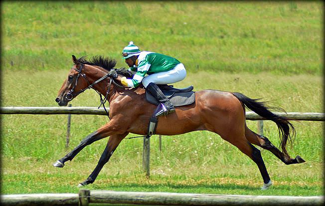 11-summer-gallops.jpg