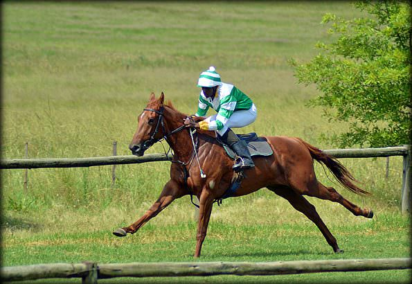 14-summer-gallops.jpg