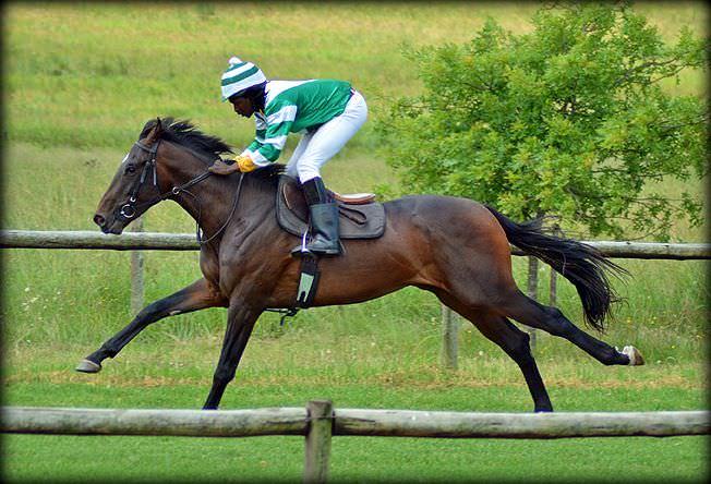 13-summer-gallops.jpg