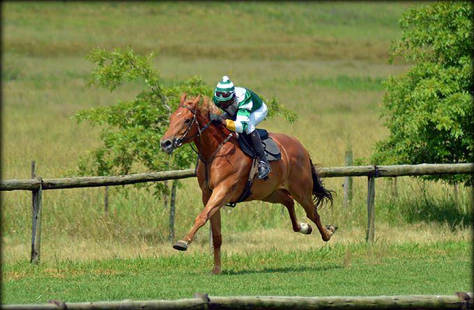15-summer-gallops.jpg