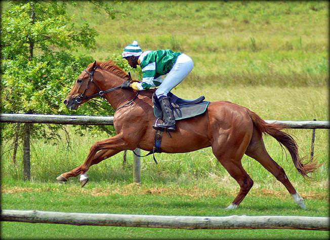 16-summer-gallops.jpg