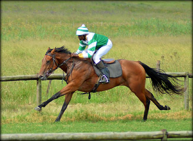 20-summer-gallops.jpg