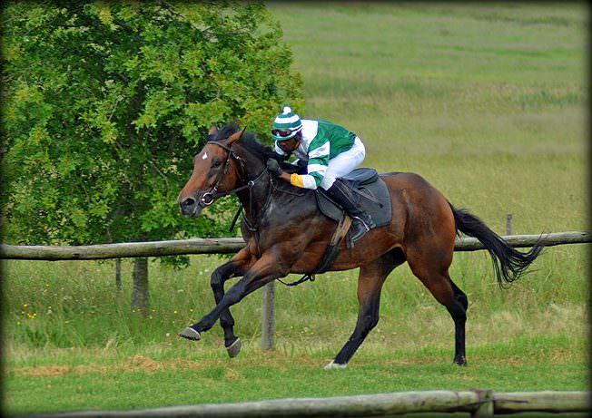 21-summer-gallops.jpg