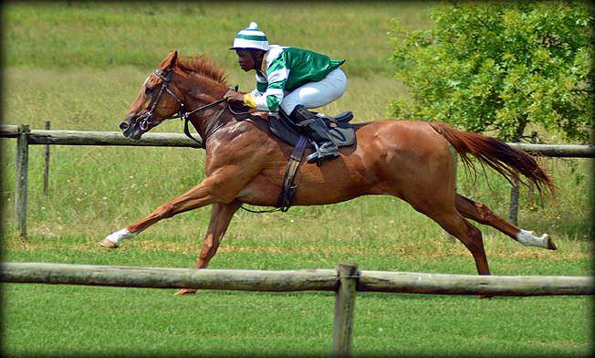 25-summer-gallops.jpg