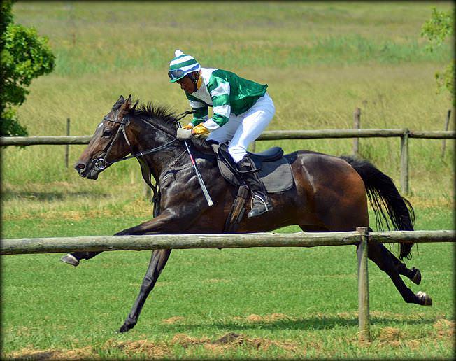 26-summer-gallops.jpg