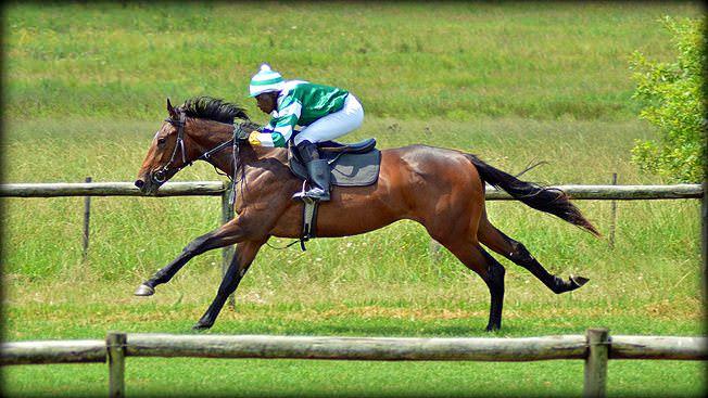 29-summer-gallops.jpg
