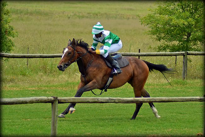 36-summer-gallops.jpg