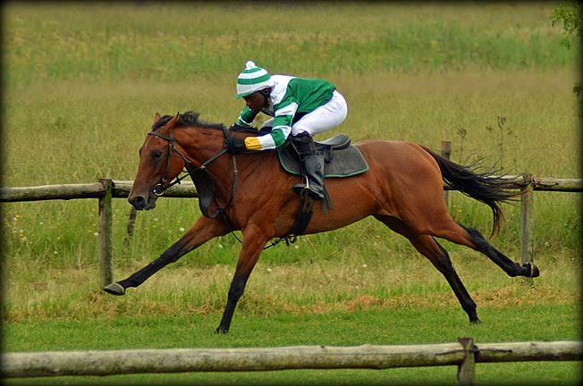 39-summer-gallops.jpg