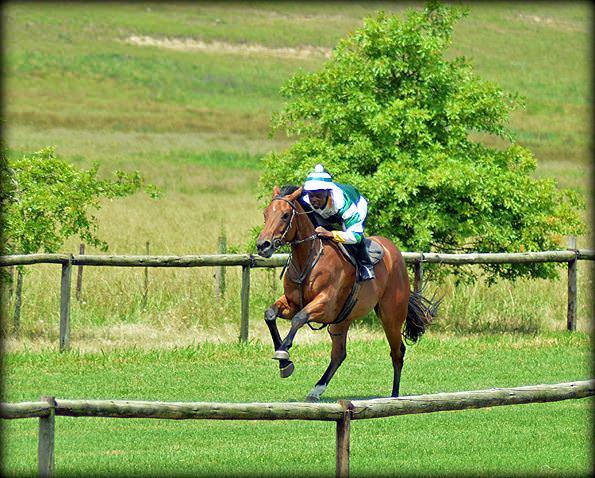 40-summer-gallops.jpg