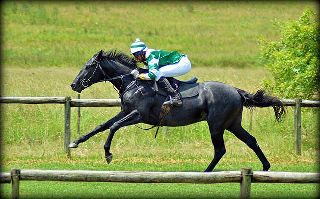 41-summer-gallops.jpg