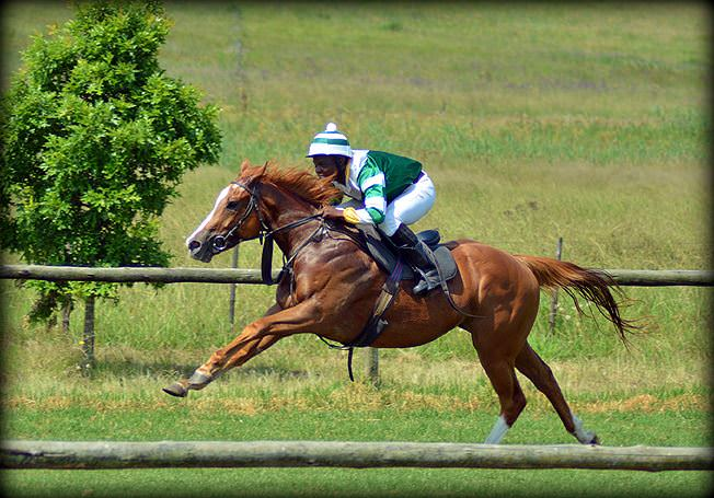 42-summer-gallops.jpg