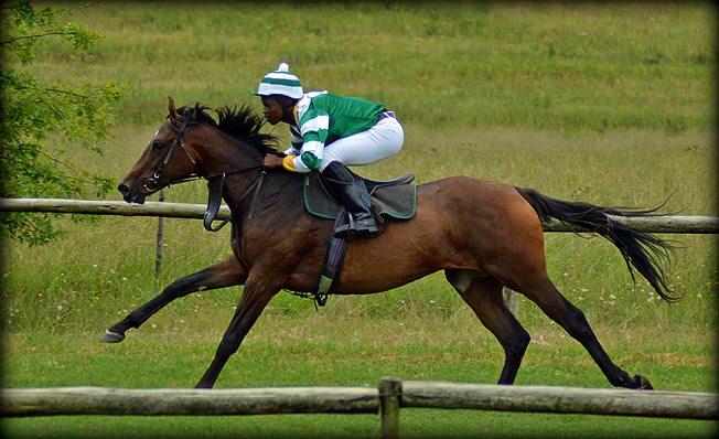 44-summer-gallops.jpg