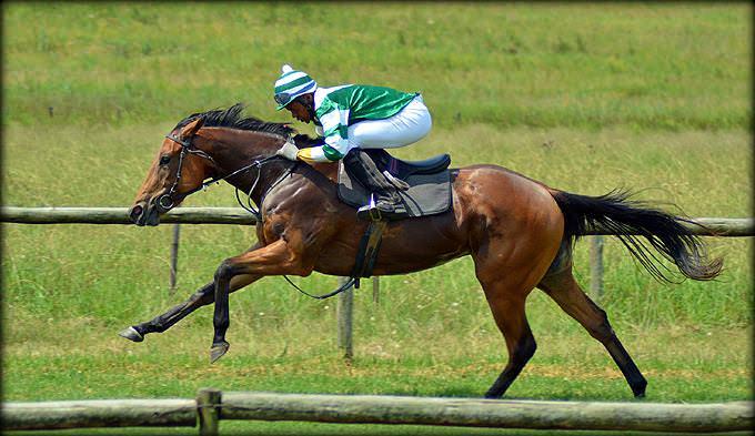 45-summer-gallops.jpg