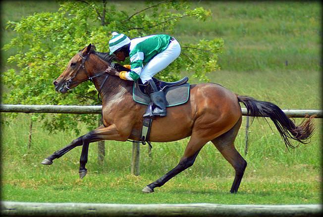 47-summer-gallops.jpg