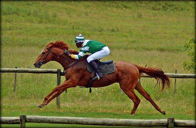 48-summer-gallops.jpg