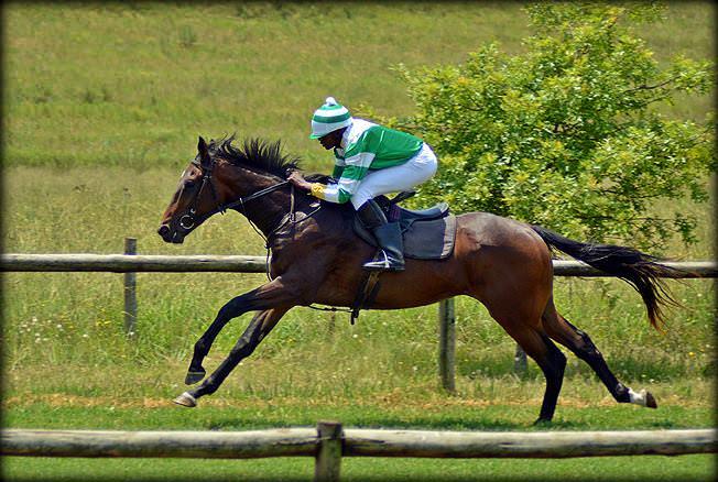 50-summer-gallops.jpg