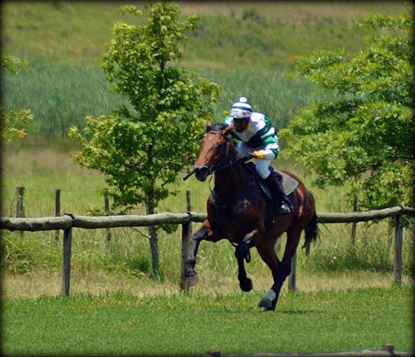 51-summer-gallops.jpg