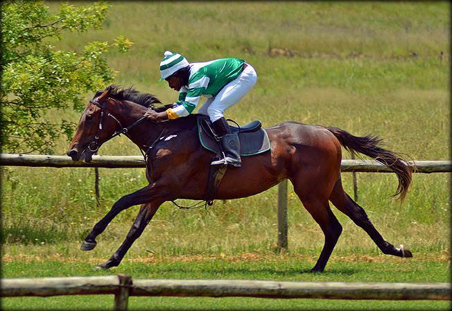 53-summer-gallops.jpg