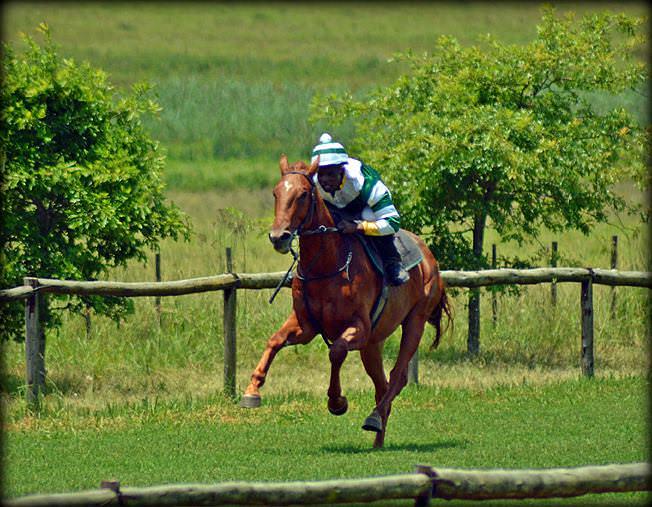 52-summer-gallops.jpg