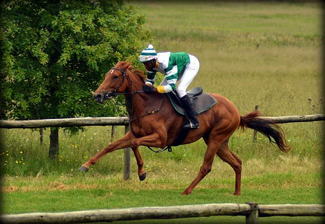 55-summer-gallops.jpg