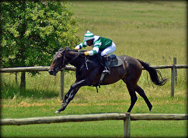 54-summer-gallops.jpg