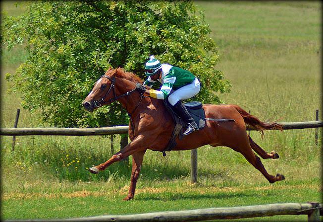 56-summer-gallops.jpg