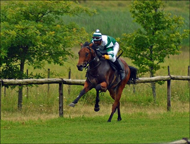 57-summer-gallops.jpg