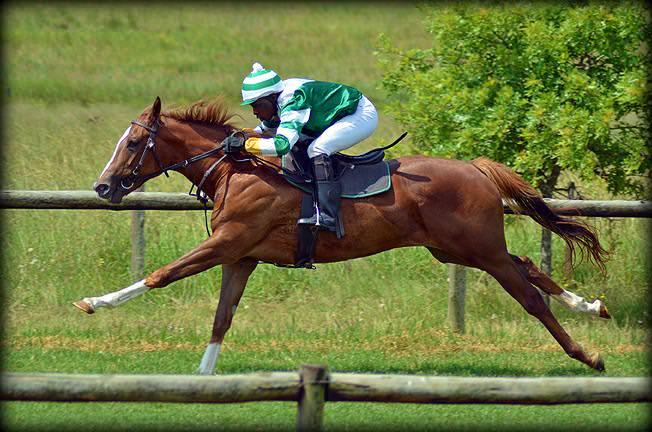 58-summer-gallops.jpg