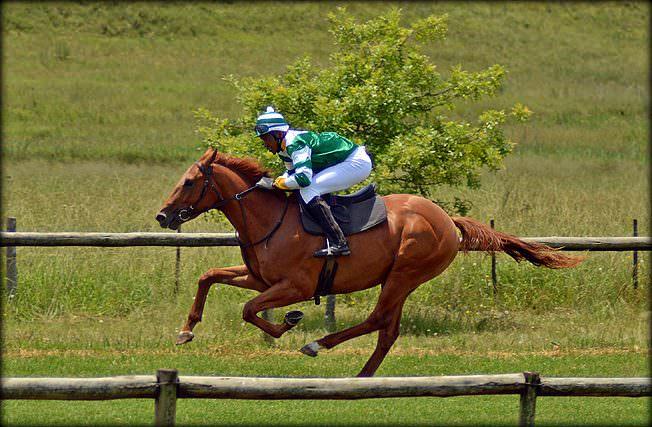 59-summer-gallops.jpg