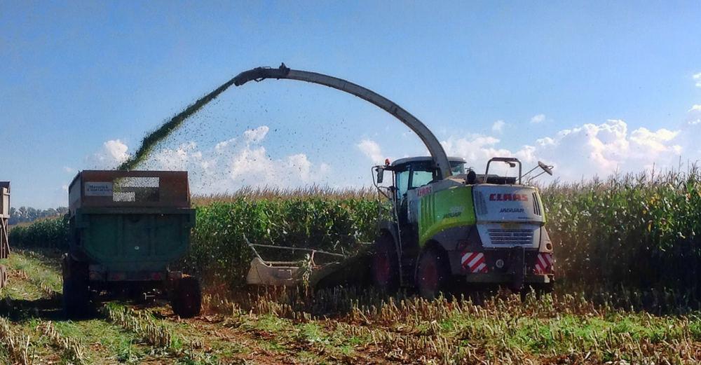 Harvesting Silage 2