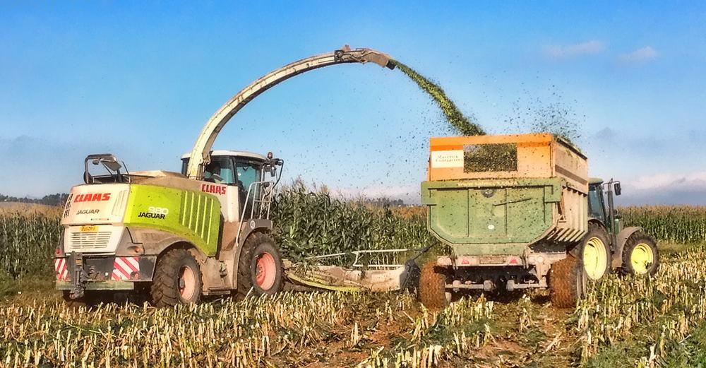 Harvesting Silage 1