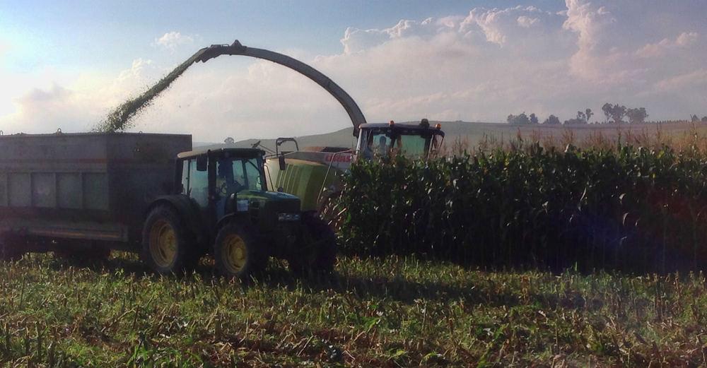 Harvesting Silage 3