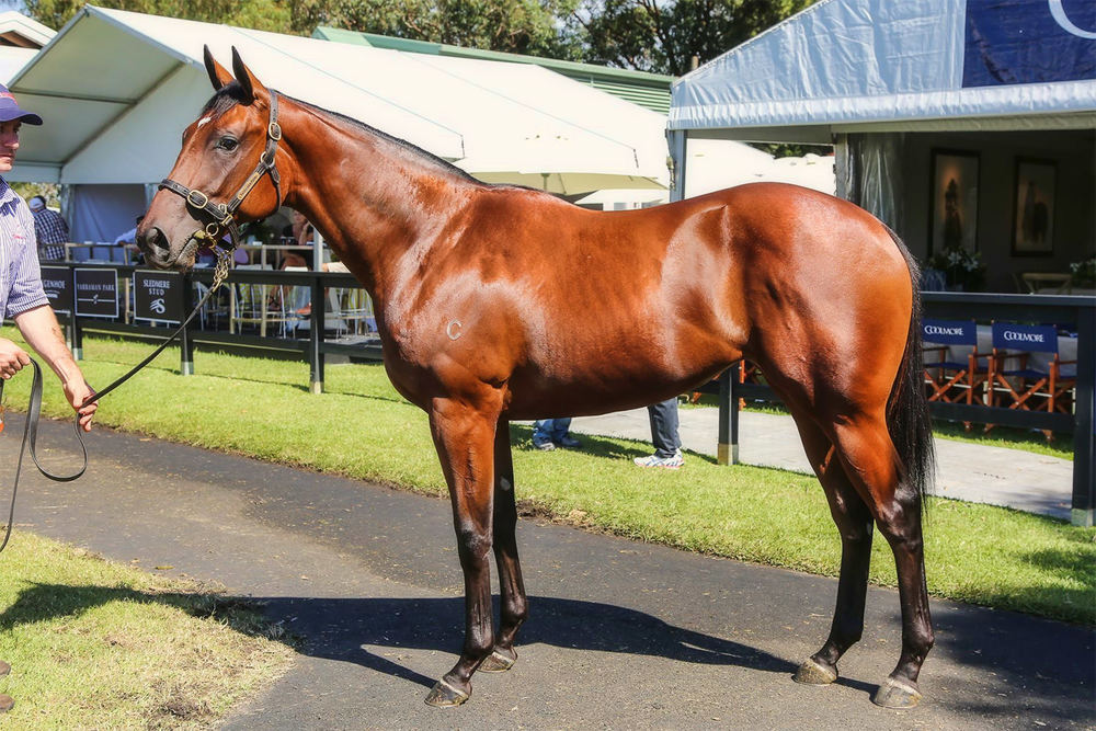 Fastnet Rock - Perfect Persuasion / Inglis (p)