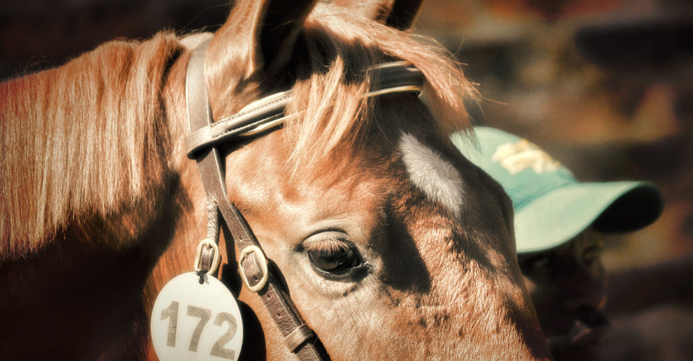 Suncoast KZN Yearling Sale 2015 ->