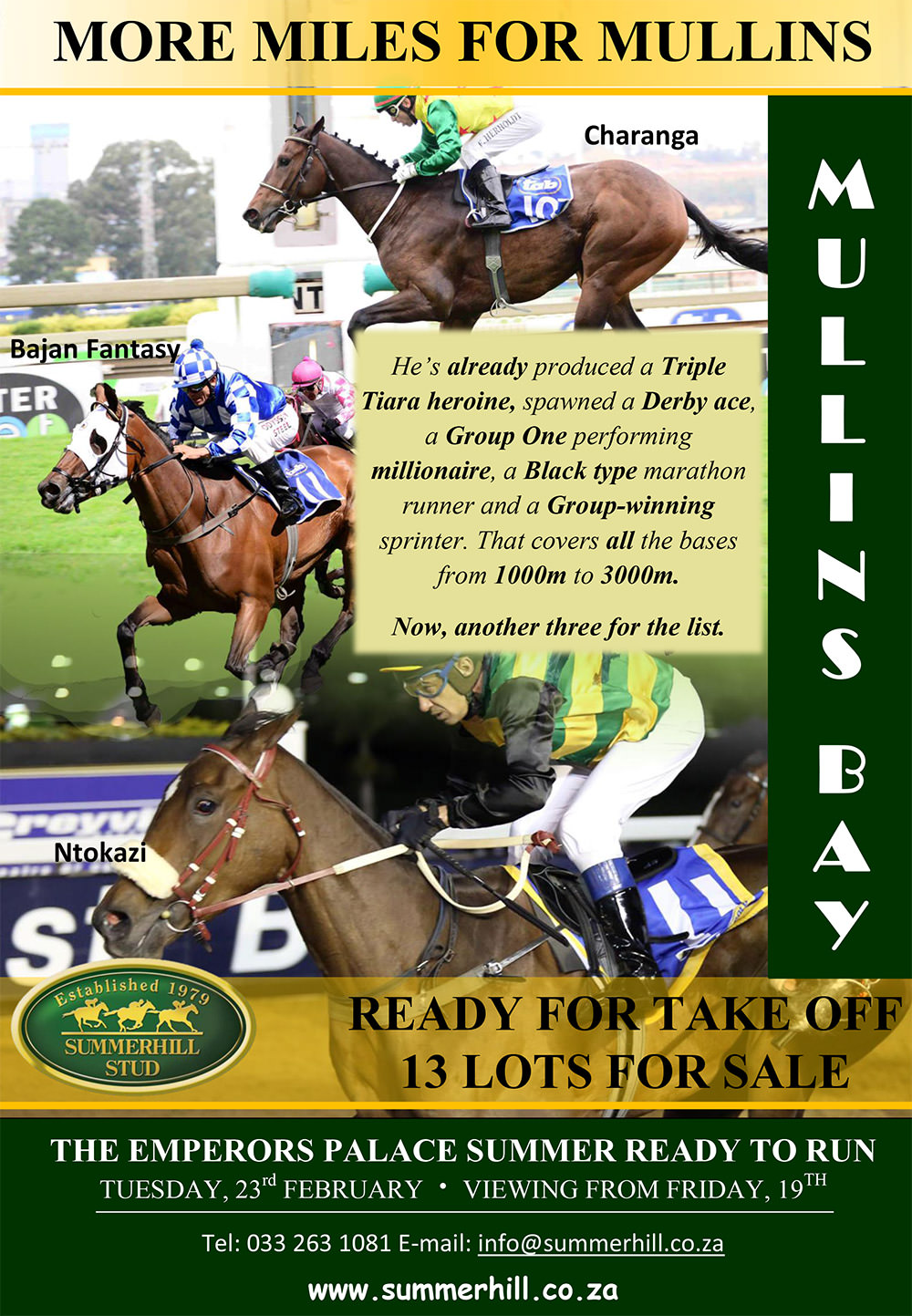 Mullins Bay - Summer Ready To Run Sale