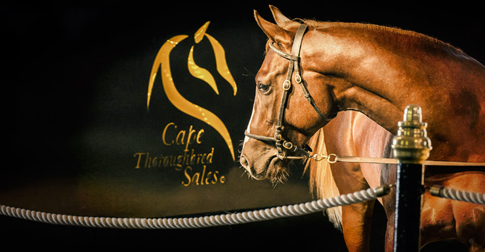 CTS Emperors Palace Select Yearling Sale 2016 ->