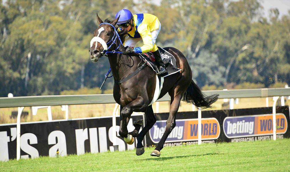belle-rose-horse-1.jpg