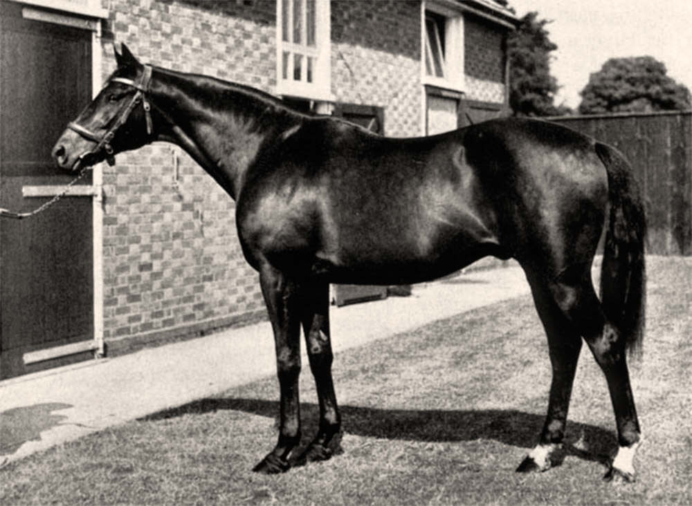 Nearco / Jockey Site (p)